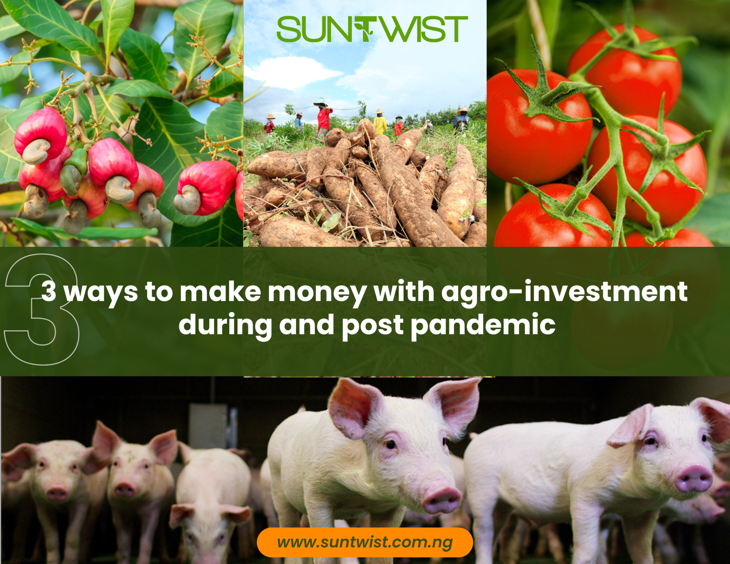 3 ways to make money with agro-investment during and post-pandemic