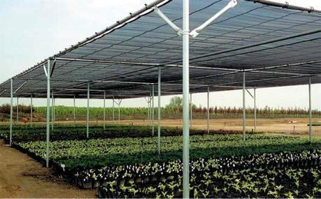 Shadehouse greenhouse