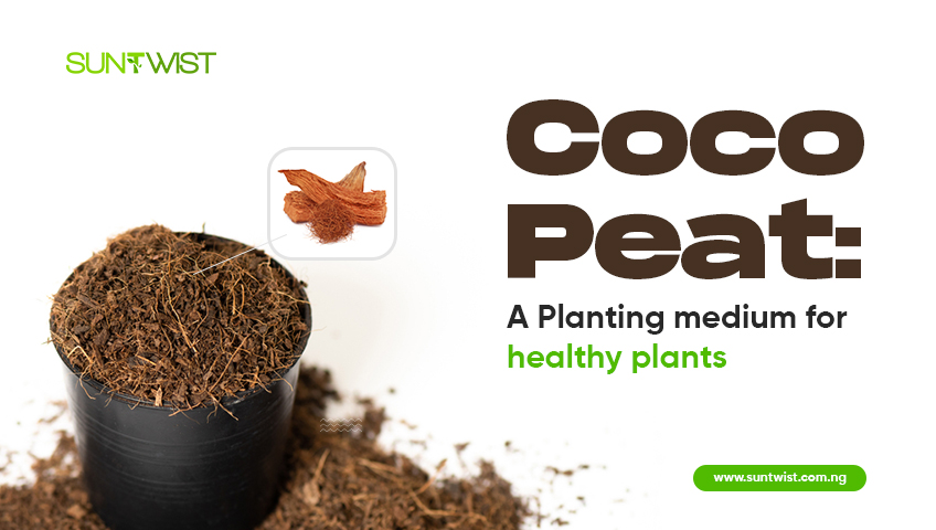 coco-peat-a-planting-medium-for-healthy-plants