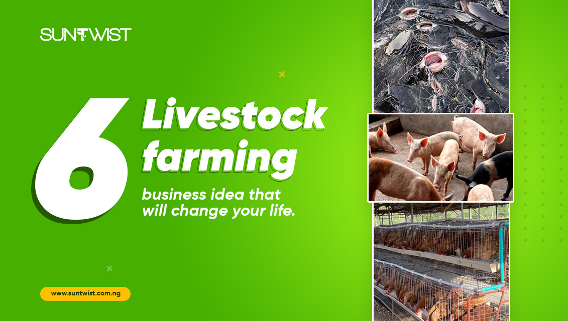 6-livestock-farming-business-ideas-that-will-change-your-life