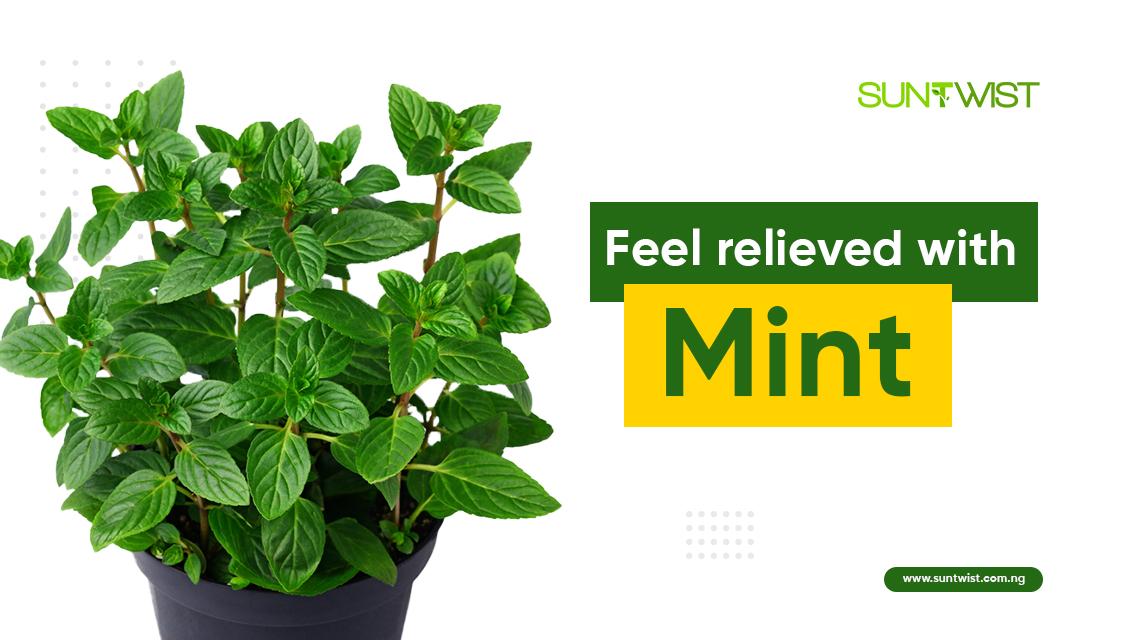 mint-plant