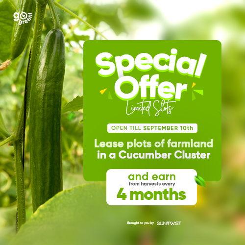 Cucumber Farm_www.suntwist.com (1)